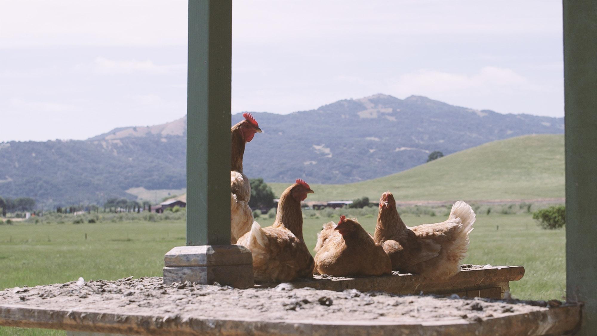 napa organic farm
